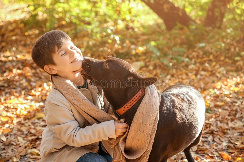 Cute little boy with dog in autumn park royalty free stock photo