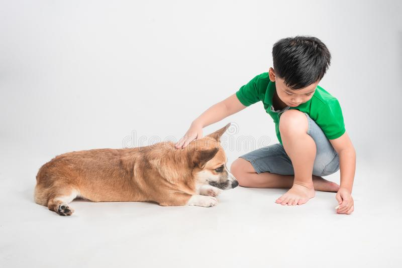 Cute little boy with dog on white background stock photos