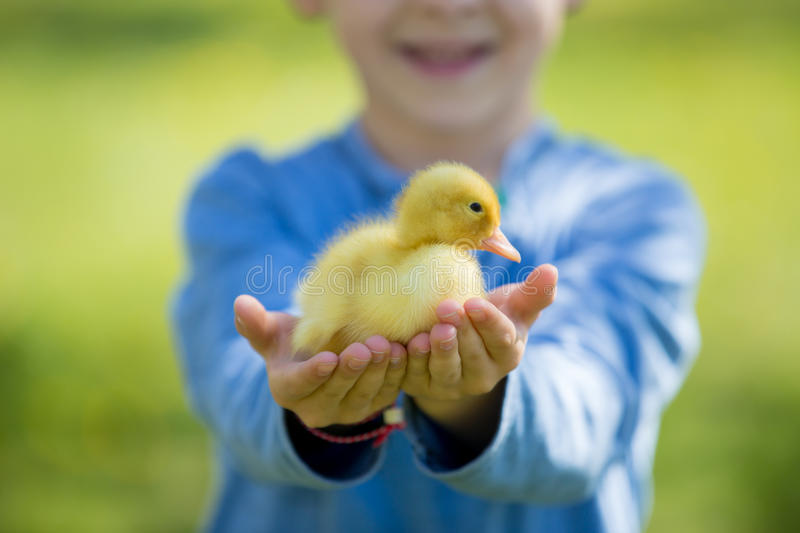 Cute little boy with ducklings springtime, playing together royalty free stock image