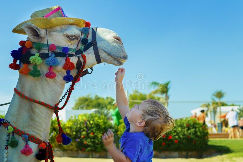 Cute little boy feeding camel on the beach. Holidays on the sea. Copy space stock photo