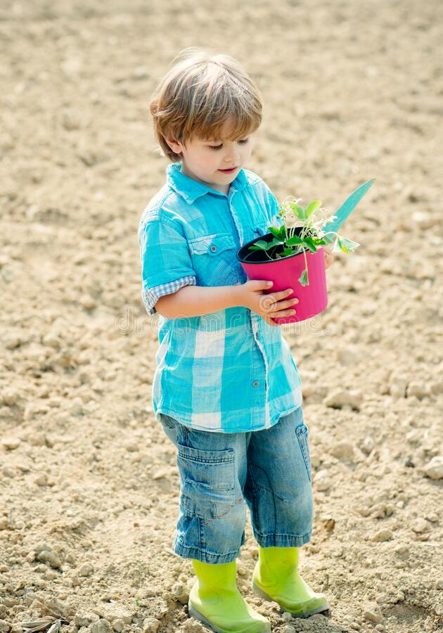 Cute little boy having fun at countryside. Child farmer working in field. Happy childhood concept. Son planting flowers royalty free stock photo