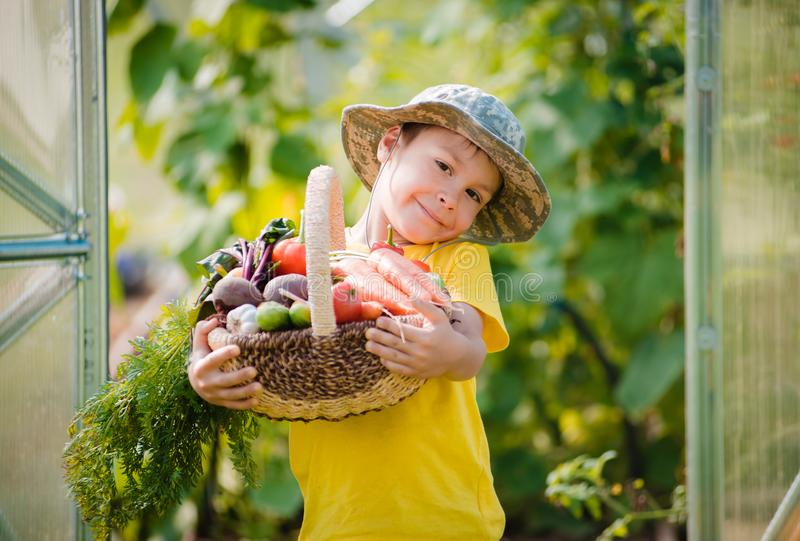Cute little boy holding a bunch of fresh organic vegetables in domestic garden. stock images