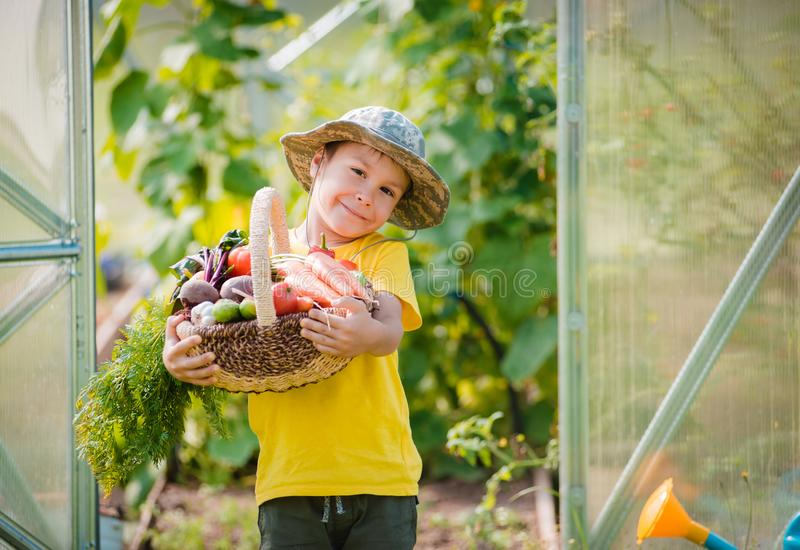 Cute little boy holding a bunch of fresh organic vegetables in domestic garden. royalty free stock images