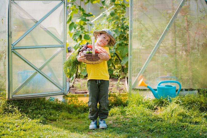 Cute little boy holding a bunch of fresh organic vegetables in domestic garden. stock image