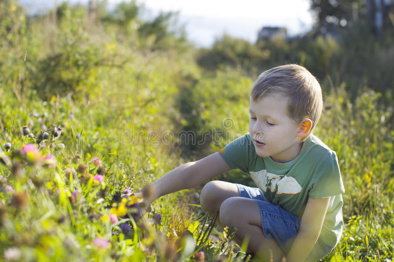 Cute little boy picking clover blossoms stock photography