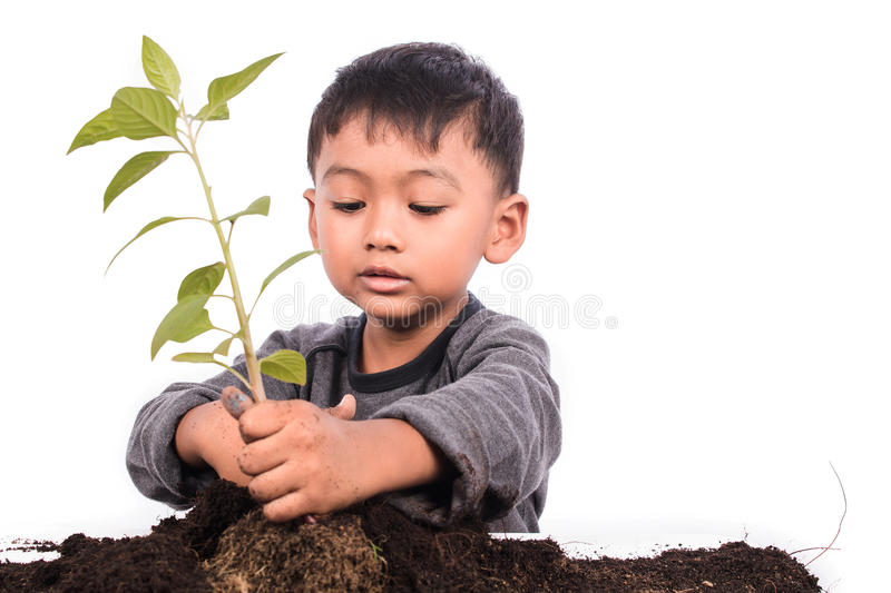 Cute little boy planting tree. On white background royalty free stock image