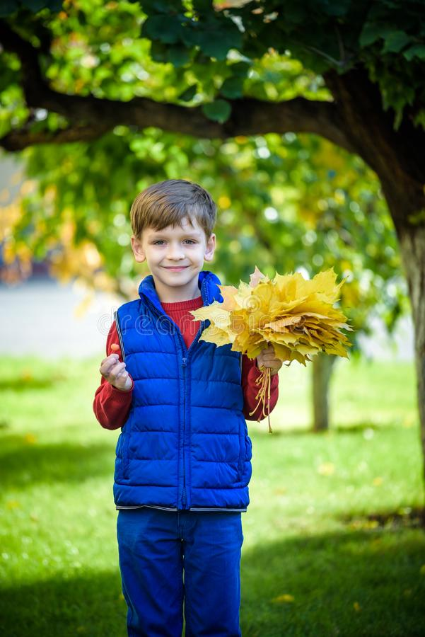 Cute little boy playing in autumn on nature walk. Boy holding bunch of maple leaves in park. Autumn, childhood and people concept stock photos