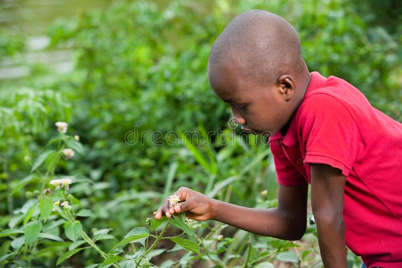 Young child picks flowers in the bush royalty free stock photo