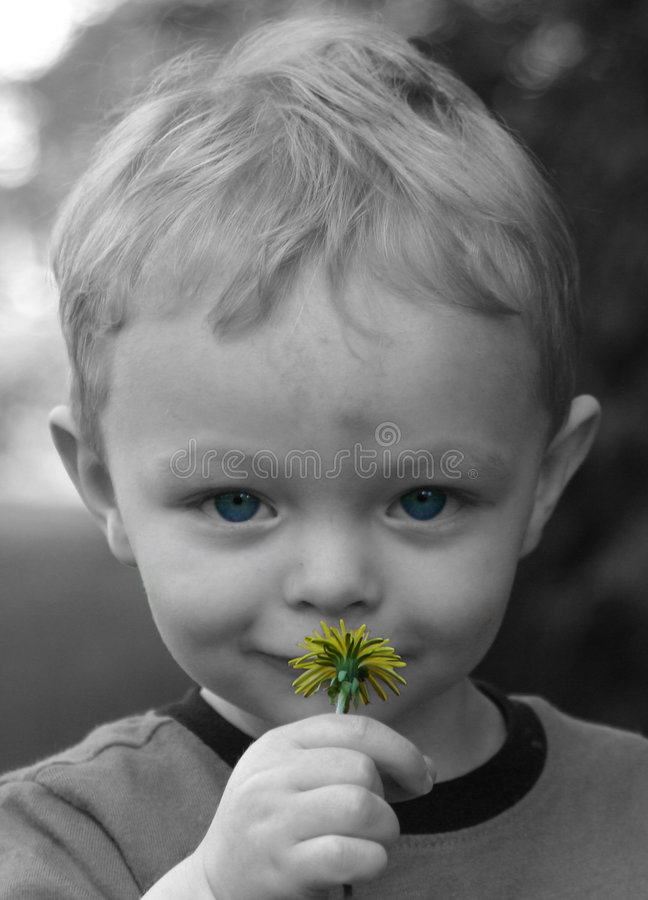 Download Cute Little Boy Smelling Flowe Royalty Free Stock Photography - Image: 2324837