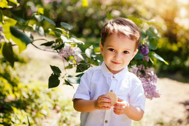 Cute little boy in summer with sunshine, beautiful child royalty free stock image