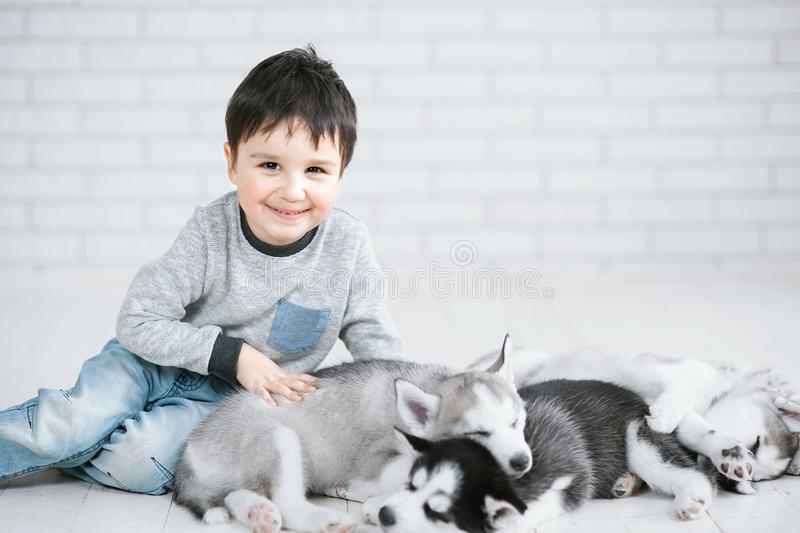 Cute little boy and three young husky puppies sleeping on a white background. Symbol of new year 2018 royalty free stock photos