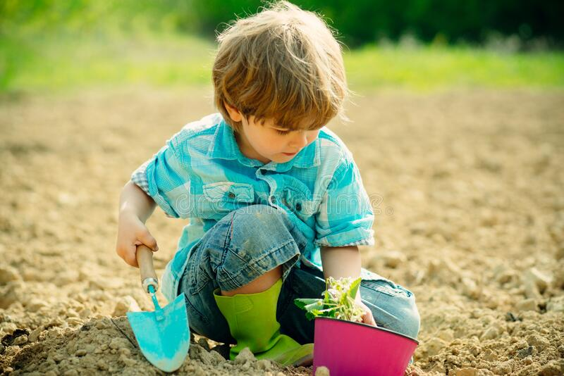 Cute little boy watering plants in the garden at spring sunny day. Crop planting at fields. Pretty cute kid working and stock photos