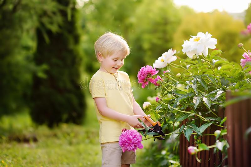Cute little boy working with secateur in domestic garden. Farming, gardening and childhood concept royalty free stock photography