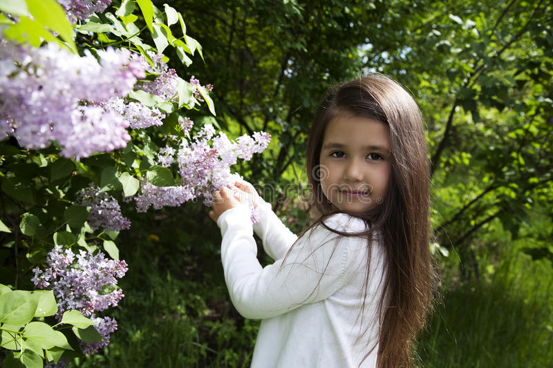 Cute little brunette girl, dressed in a white shirt , she holds a blossoming branch of lilac stock image