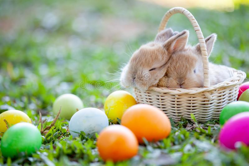 Cute bunny sleeping in the basket and easter eggs in the meadow. Cute little bunny sleeping in the basket and easter eggs in the meadow stock photos