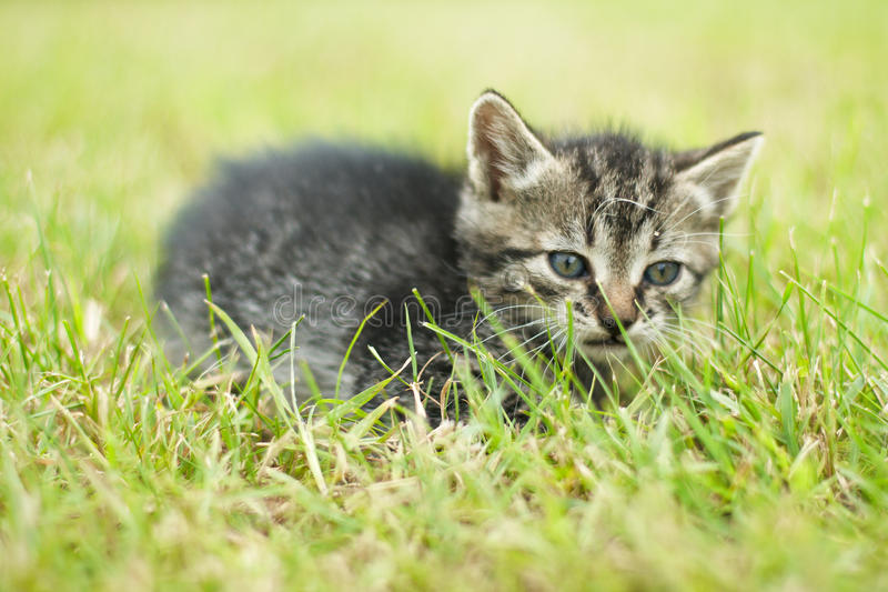 Cute little cat. Laying in grass stock photography