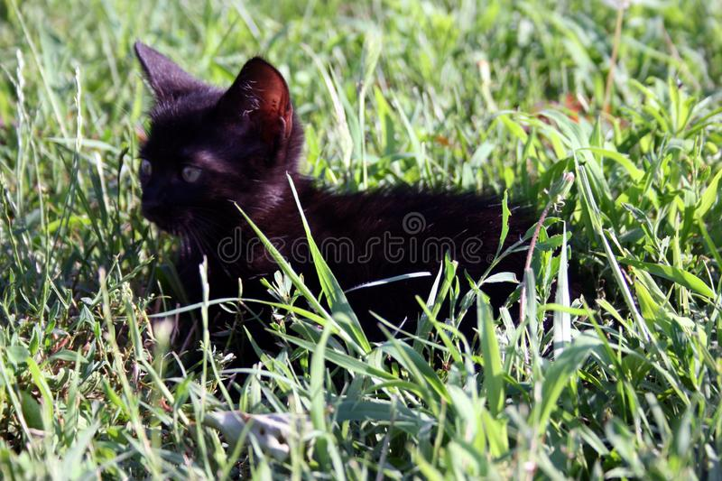 Cute little cat on the grass. Cute little cat playing on the grass royalty free stock image
