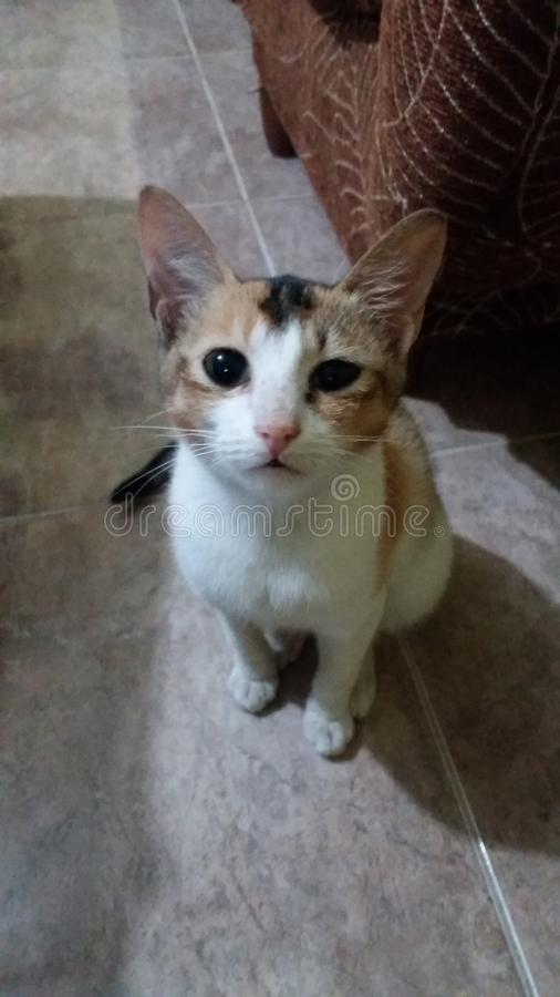 Cute little cat in the home. Cats are very friendly animal with people.they are sooooo cute stock image