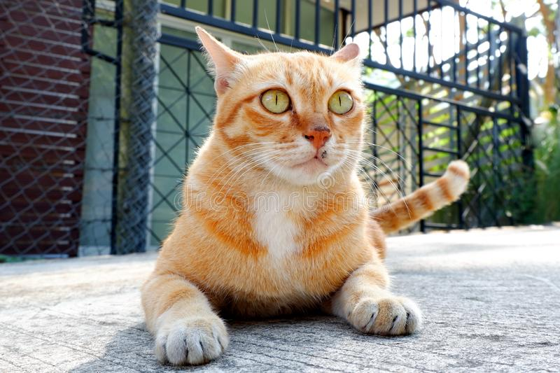 Cute little cat looking. Cute little cat Looking for a play royalty free stock images
