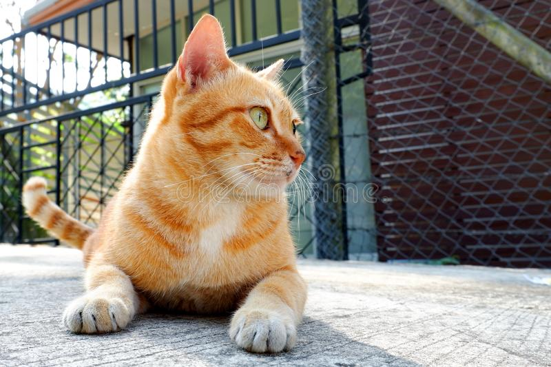 Cute little cat looking. Cute little cat Looking for a play stock image