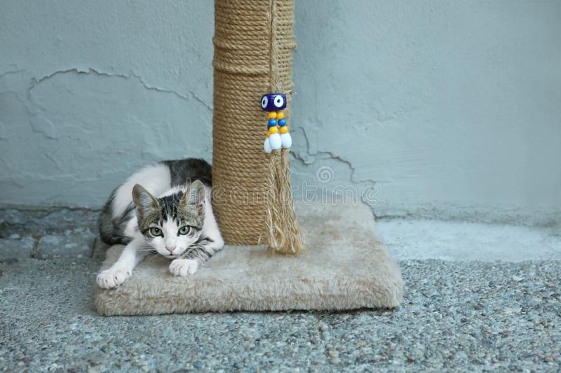 Cute little cat lying on scratching post. Outdoors stock photography