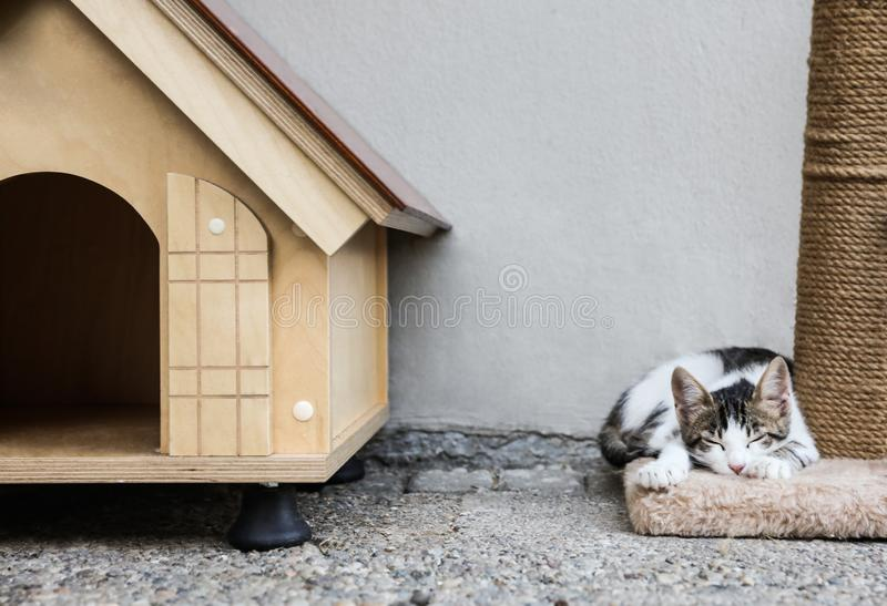 Cute little cat lying on scratching post near pet house. Outdoors royalty free stock image