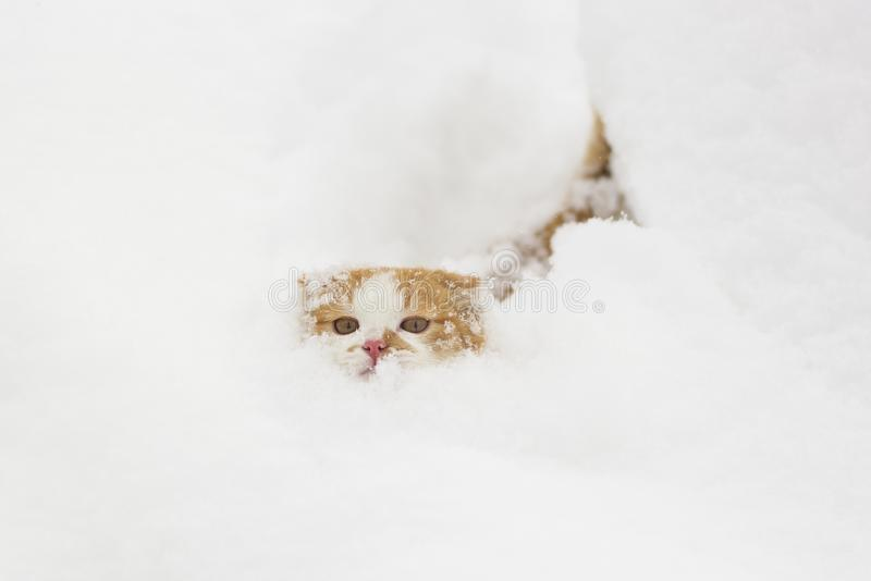 Cute little cat making his way through the snow.  royalty free stock images