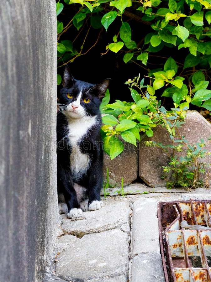 Cute little cat peeking out and look form the niche glimpse with. A curious expresso stock photography