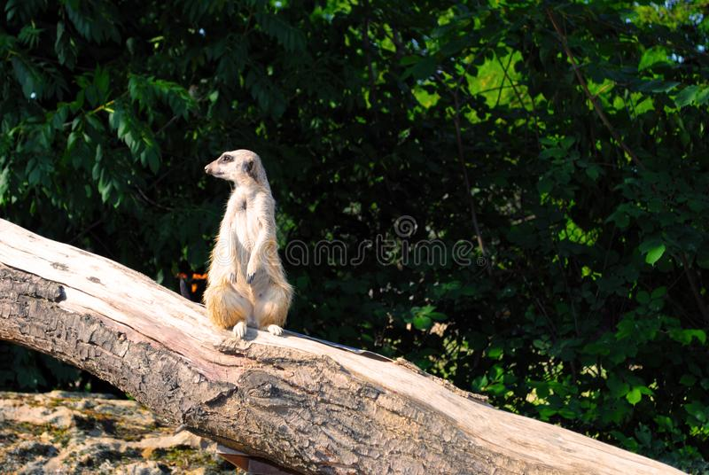A cute little cat picked up. Standing on a tree. Animals background royalty free stock images