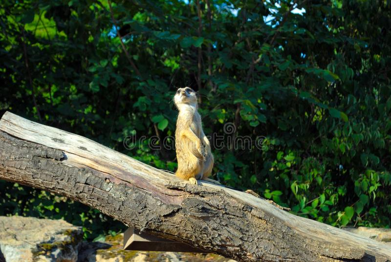 A cute little cat picked up. Standing on a tree. Animals background stock image