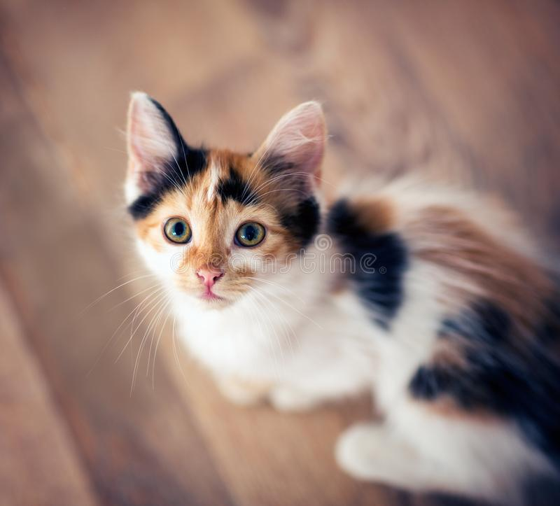 Cute little cat playing. Top view stock photo