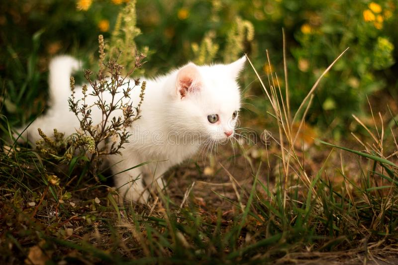 Cute little cat sitting near yellow flowers royalty free stock image