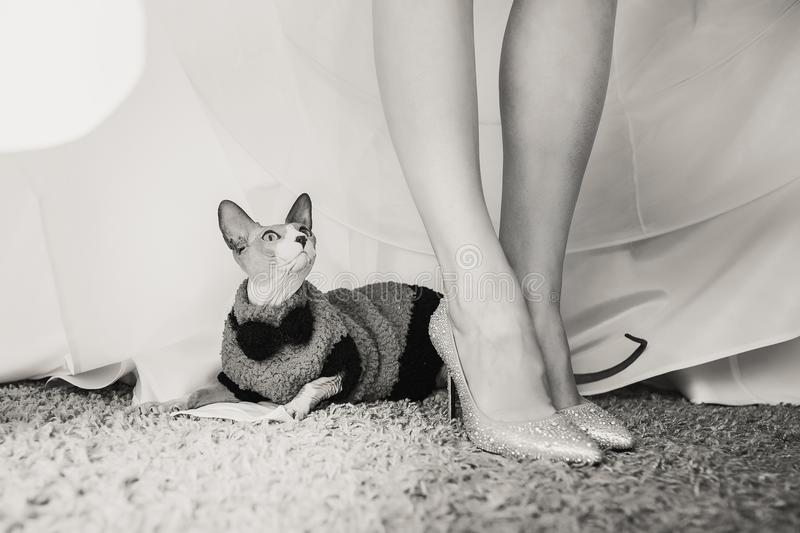 Cute little cat sitting in a suit under bride dress stock photos