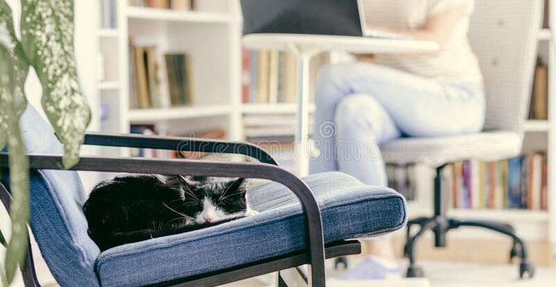 cute little cat sleeping in an armchair woman working from home in the background stay home and healthy coronavirus royalty free stock photo