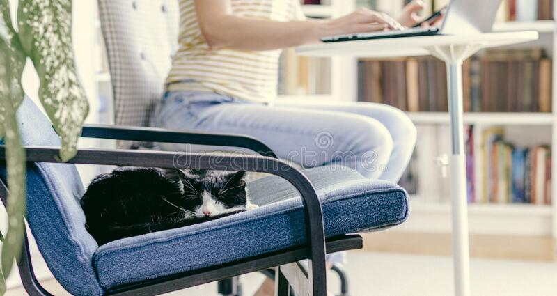 cute little cat sleeping in an armchair woman working from home in the background stay home and healthy coronavirus stock photos
