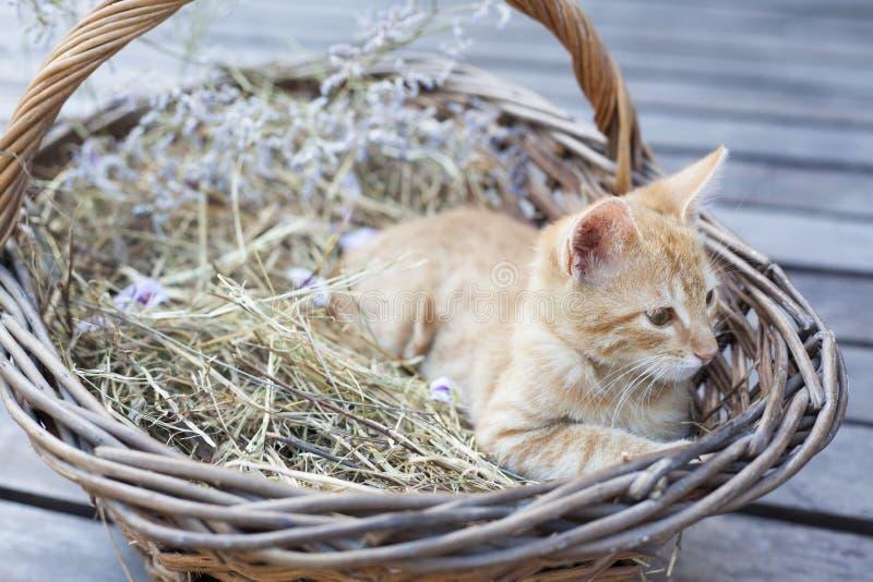 Little cat in wicker basket royalty free stock photo
