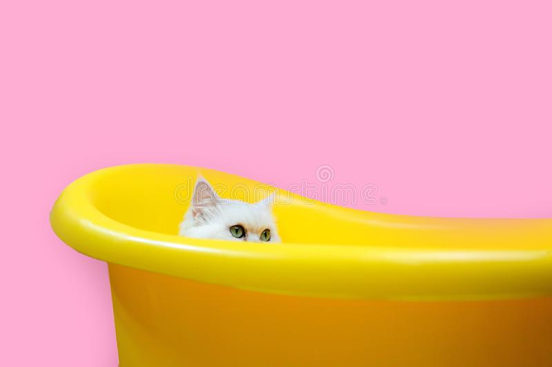 Cute little cat in yellow bathe on a pink background in Studio royalty free stock photography