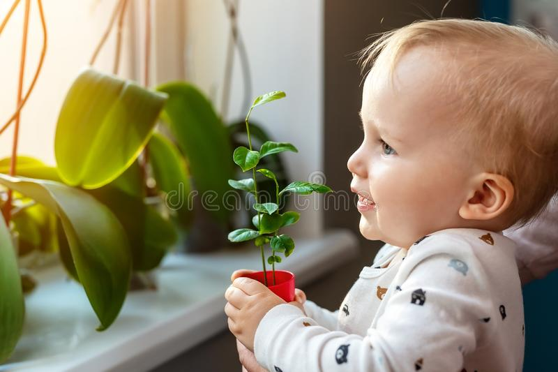 Cute little caucasian toddler boy with mother smiling and having fun holding pot with planted flower near window sill at home. royalty free stock image