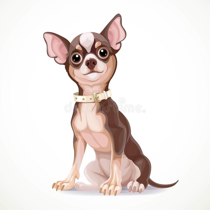 Best Chihuahua Canine Adorable Dog - cute-little-chihuahua-dog-wearing-collar-vector-illustration-isolated-white-background-53400272  Graphic_584852  .jpg