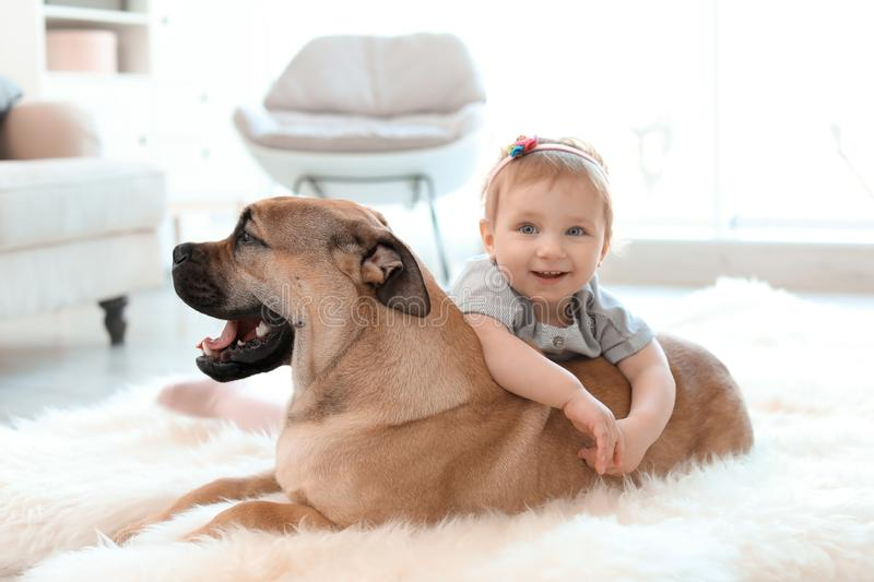 Cute little child with dog. At home royalty free stock image