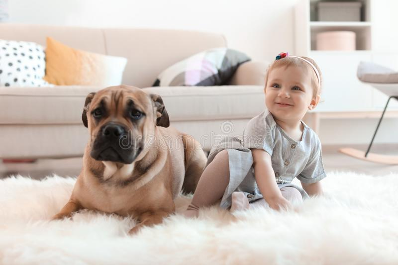 Cute little child with dog. At home stock photography