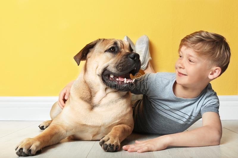 Cute little child with his dog near wall. Cute little child with his dog near color wall stock photos