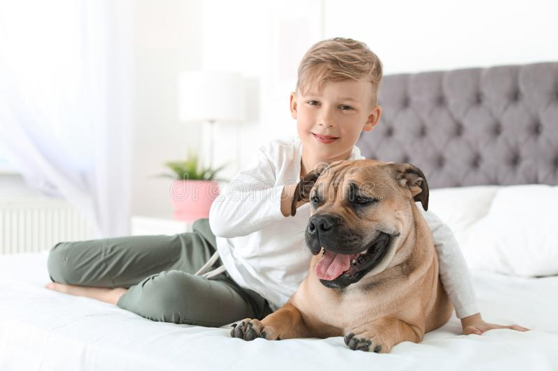 Cute little child with his dog resting on bed. At home stock images