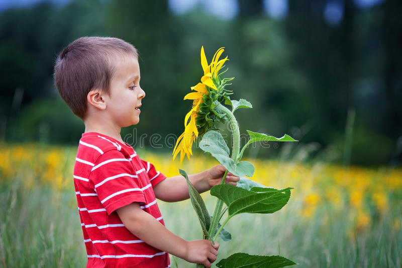 Cute little child, holding big sunflower flower in a field royalty free stock image