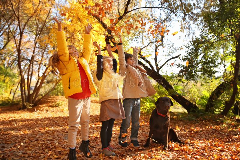 Cute little children with dog in autumn park royalty free stock photos