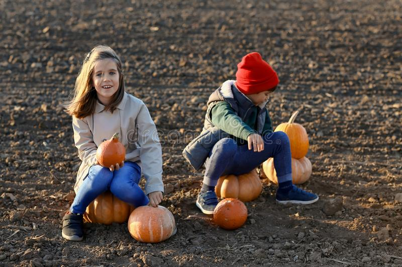 Cute little children sitting on pumpkins in autumn field stock photo