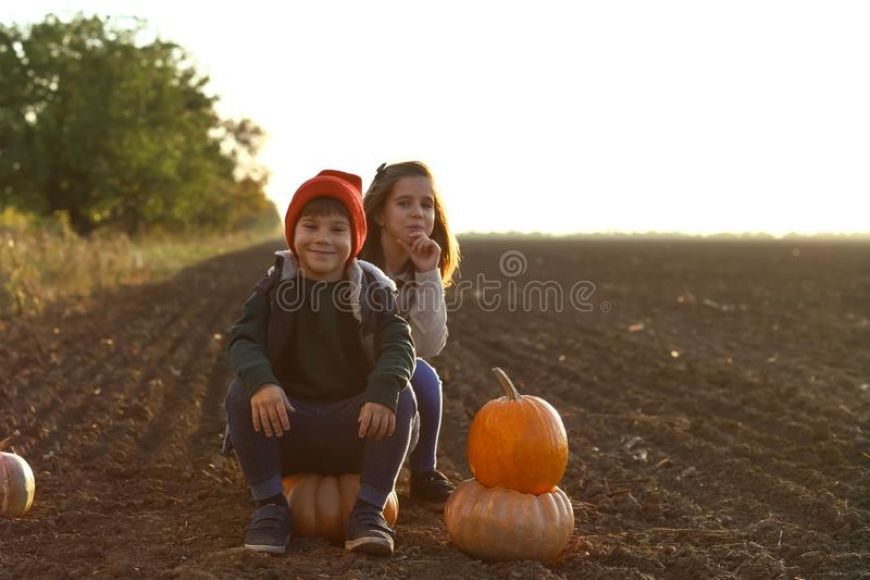 Cute little children sitting on pumpkins in autumn field stock photos