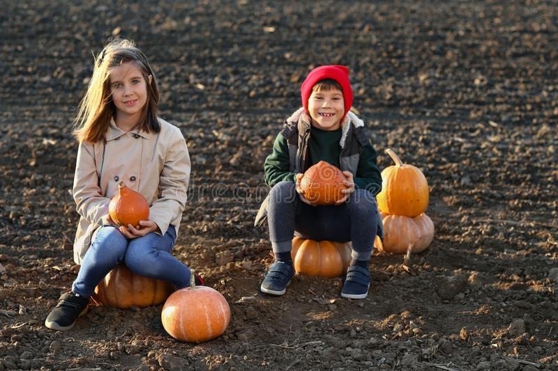 Cute little children sitting on pumpkins in autumn field stock images