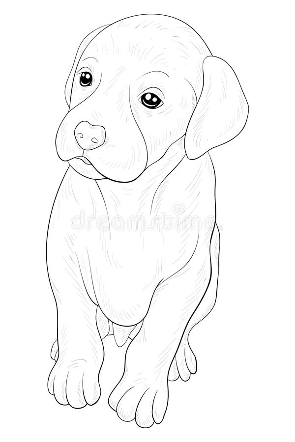 Download Adult Coloring Page A Cute Little Isolated Dog For RelaxingLine Art Style Illustration