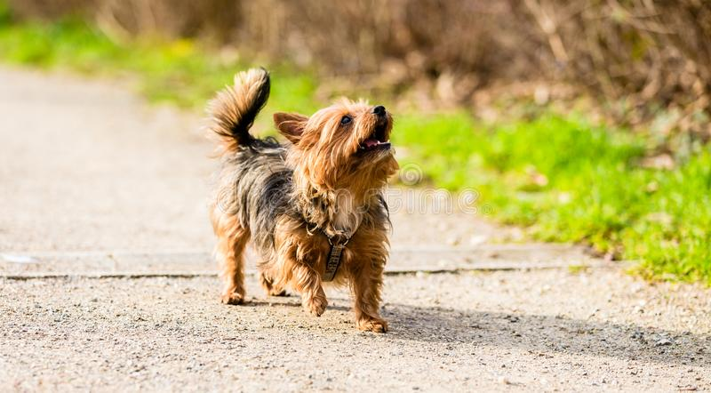 Little dog on forest path for walk. Cute little dog on forest path for walk royalty free stock images